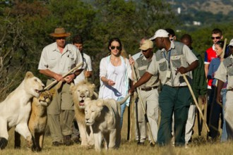 The Ranch Limpopo Walking With Lions